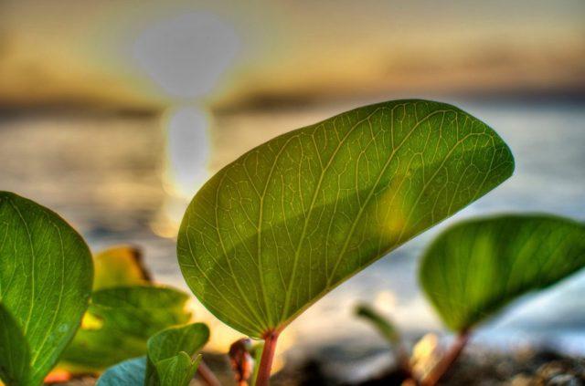 Untitled (Leaf), Original Processing
