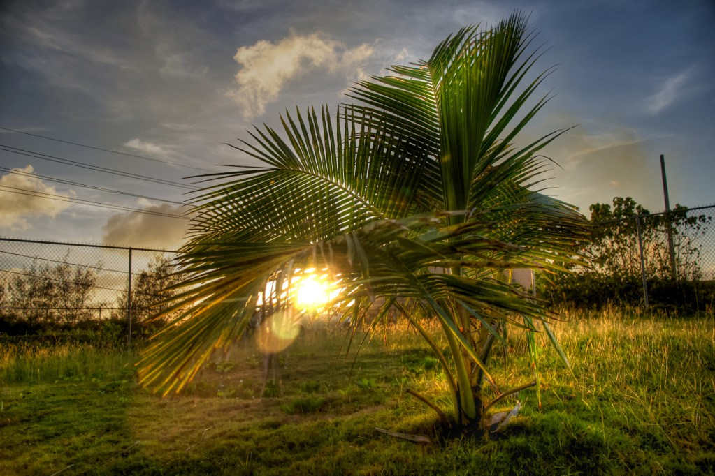 The Glowing Palm