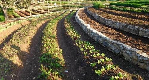 Terrace farming in Langtang