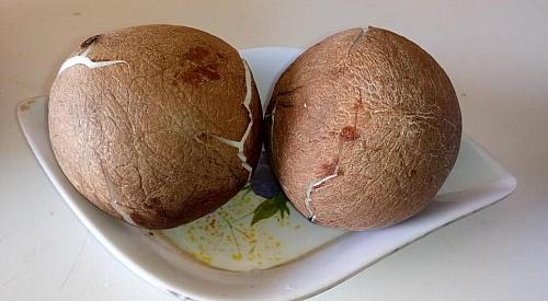 Coconut flesh for making coconut milk