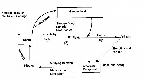 Nitrogen Cycle Diagram showing the different steps and process of the Nitrogen diagram