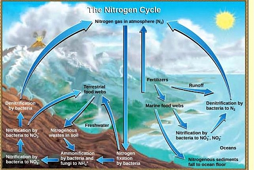 Photo of Nitrogen Cycle Diagram | Simple Nitrogen Cycle | Nitrogen Cycle Steps and Process
