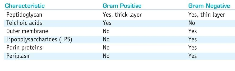 differences between gram positive and gram negative bacteria cell wall