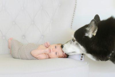 newborn and pets