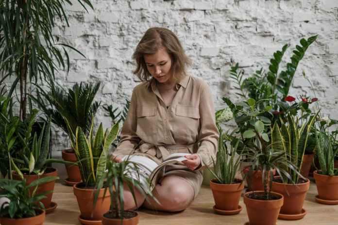 biljke-6