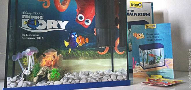 aquarium dory tetra