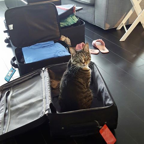 Travelling with a cat in cabin journal of a city girl for Air canada pet in cabin