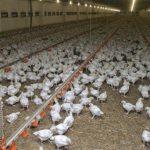 Résultats concours CNFT élevage et industries animales 2016