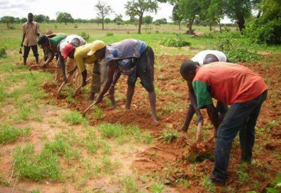 main d'oeuvre agricole jeune