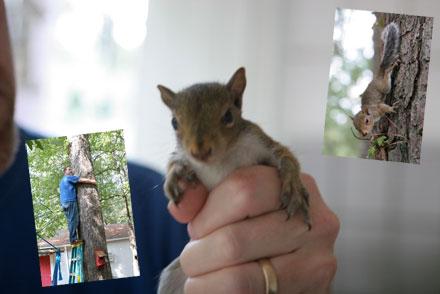 The squirrel saga