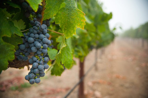 vineyards-sl-6