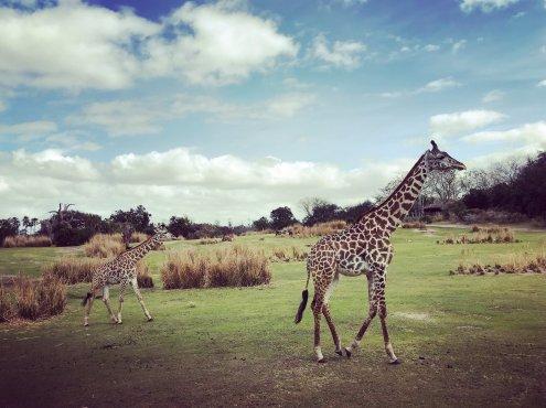 Disney World, Orlando, Florida, Animal Kingdom