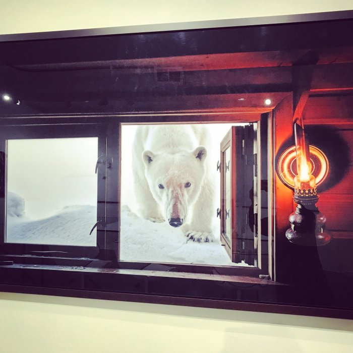 Paul Nicklen Gallery, SOHO, New York