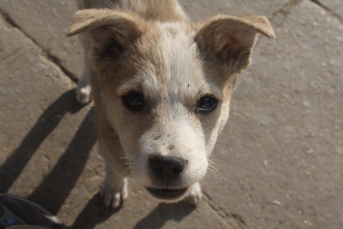 Street puppy in Kathmandu