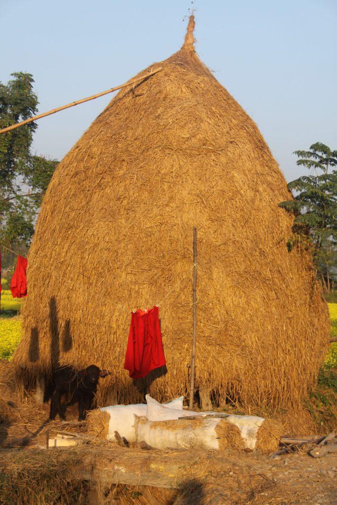 Piles of hay at Homestay