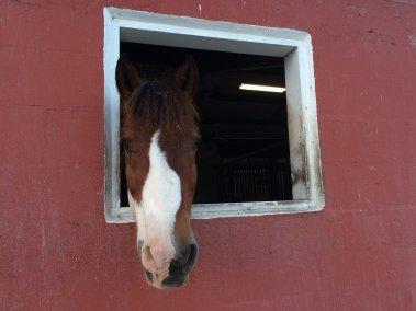Horse at barn