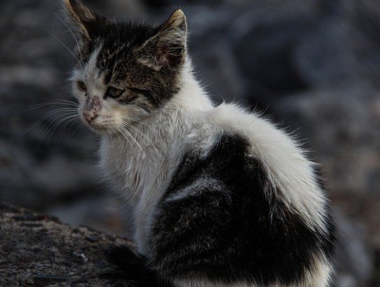 Stray and feral cats need help this winter. Do your part and donate to your local animal shelter.