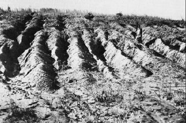 Soil erosion in Virginia, photo by W. C. Lowdermilk