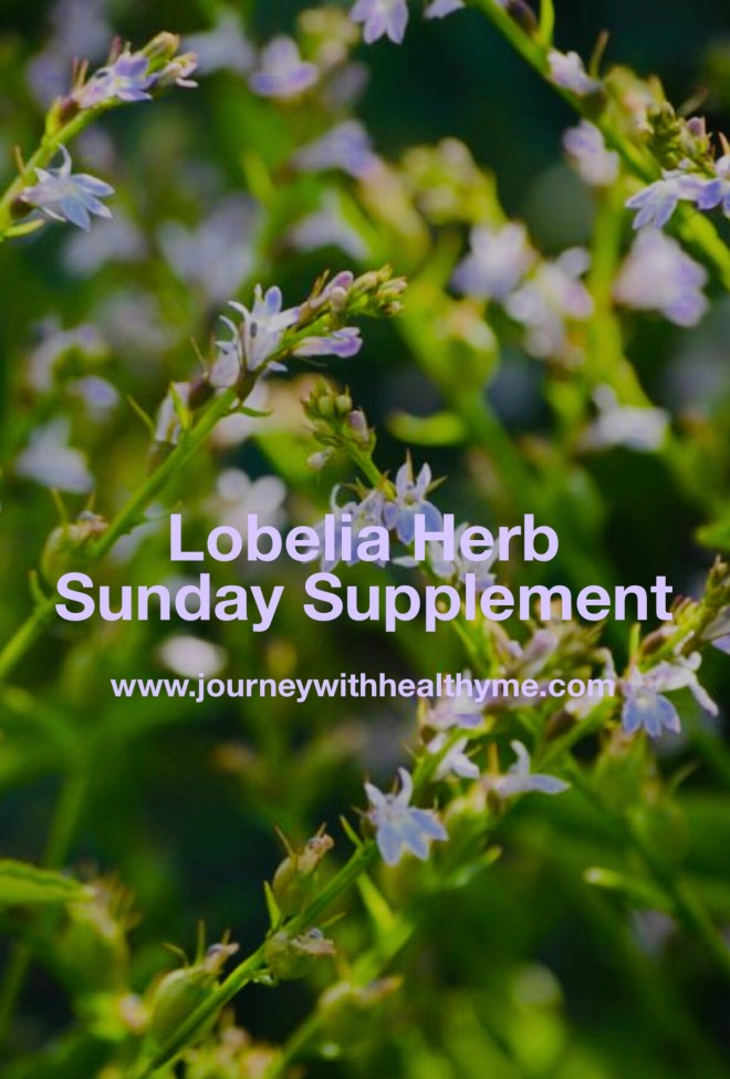 Lobelia Herb Journey With Healthy Me
