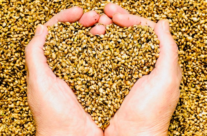 The Benefits from Eating Hemp Seeds