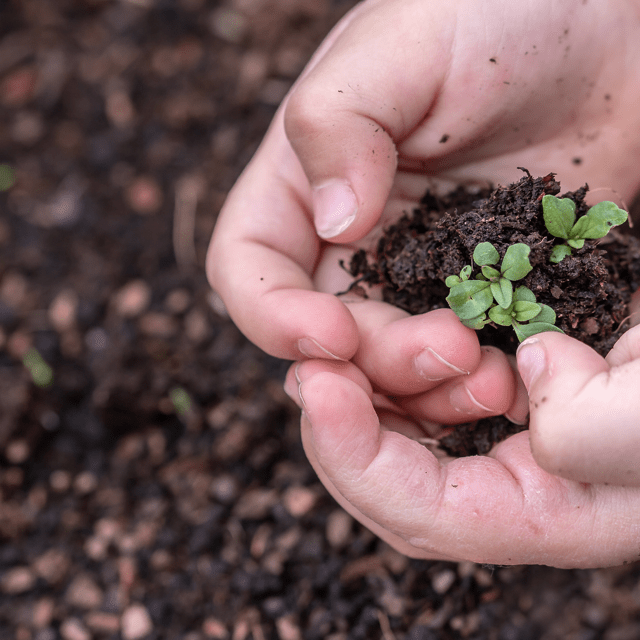 Earth Day Activities to Practice at Home gardening