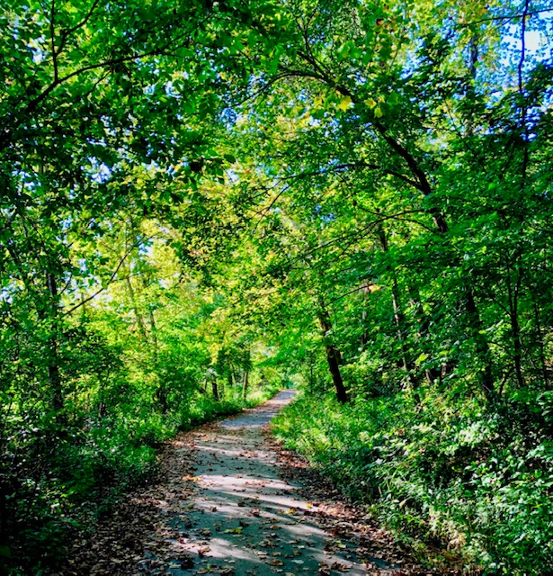 10 Surprising Benefits of Being Outdoors walk in the woods