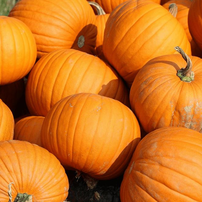 Is It a Fruit pumpkins