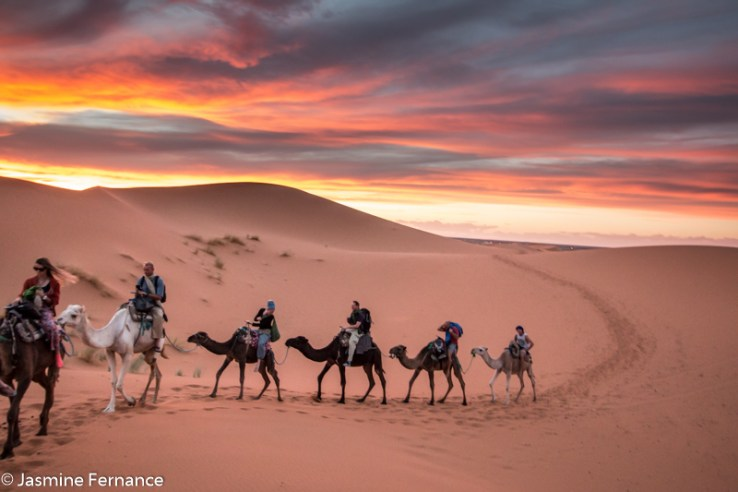 Camel riding at sunset in the Moroccan Sahara