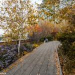 The High Line, New York, in Autumn