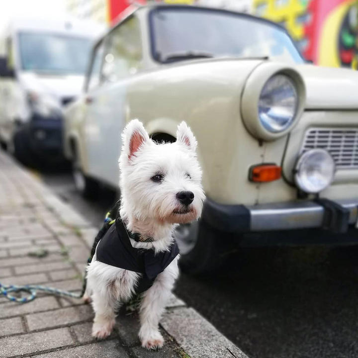 dogs of germany