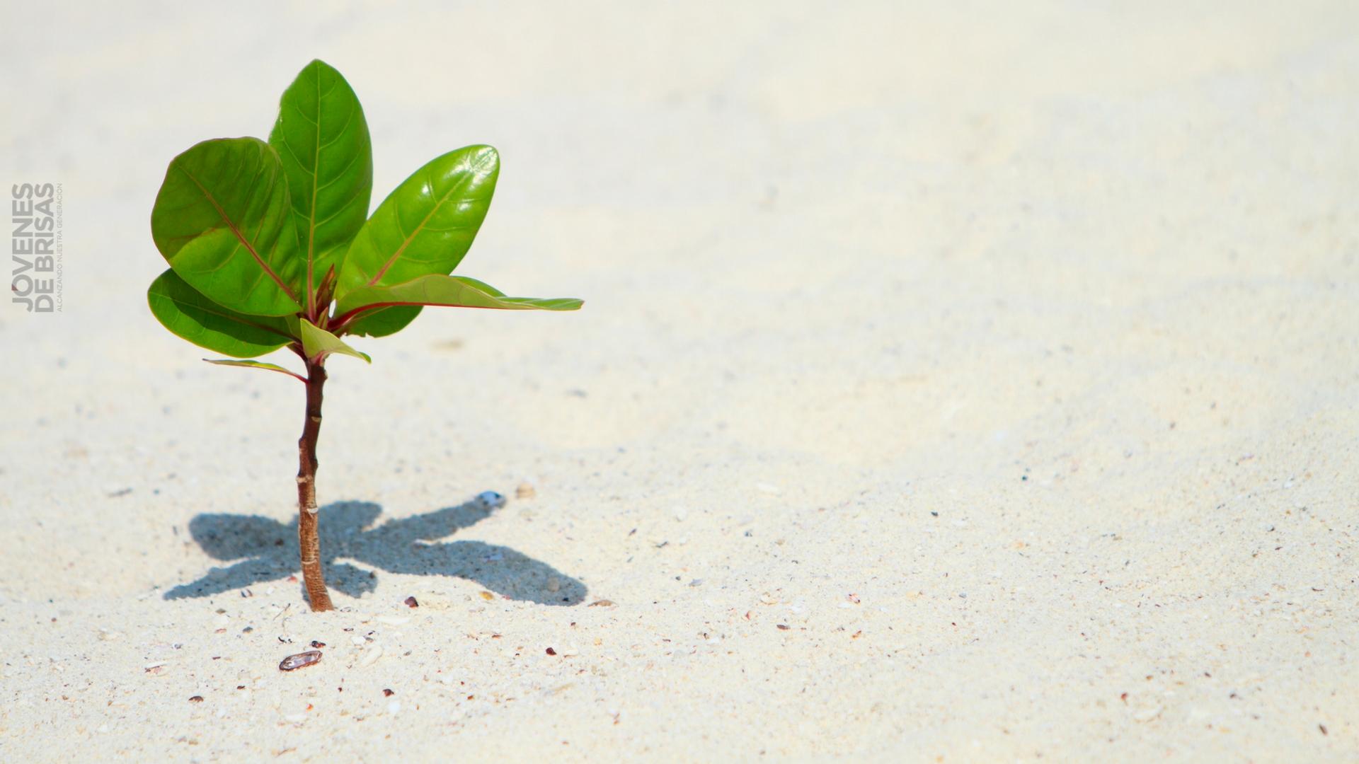 Crecer Espiritualmente