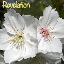Revelation DSCN2945