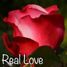 Real Love rose-386396