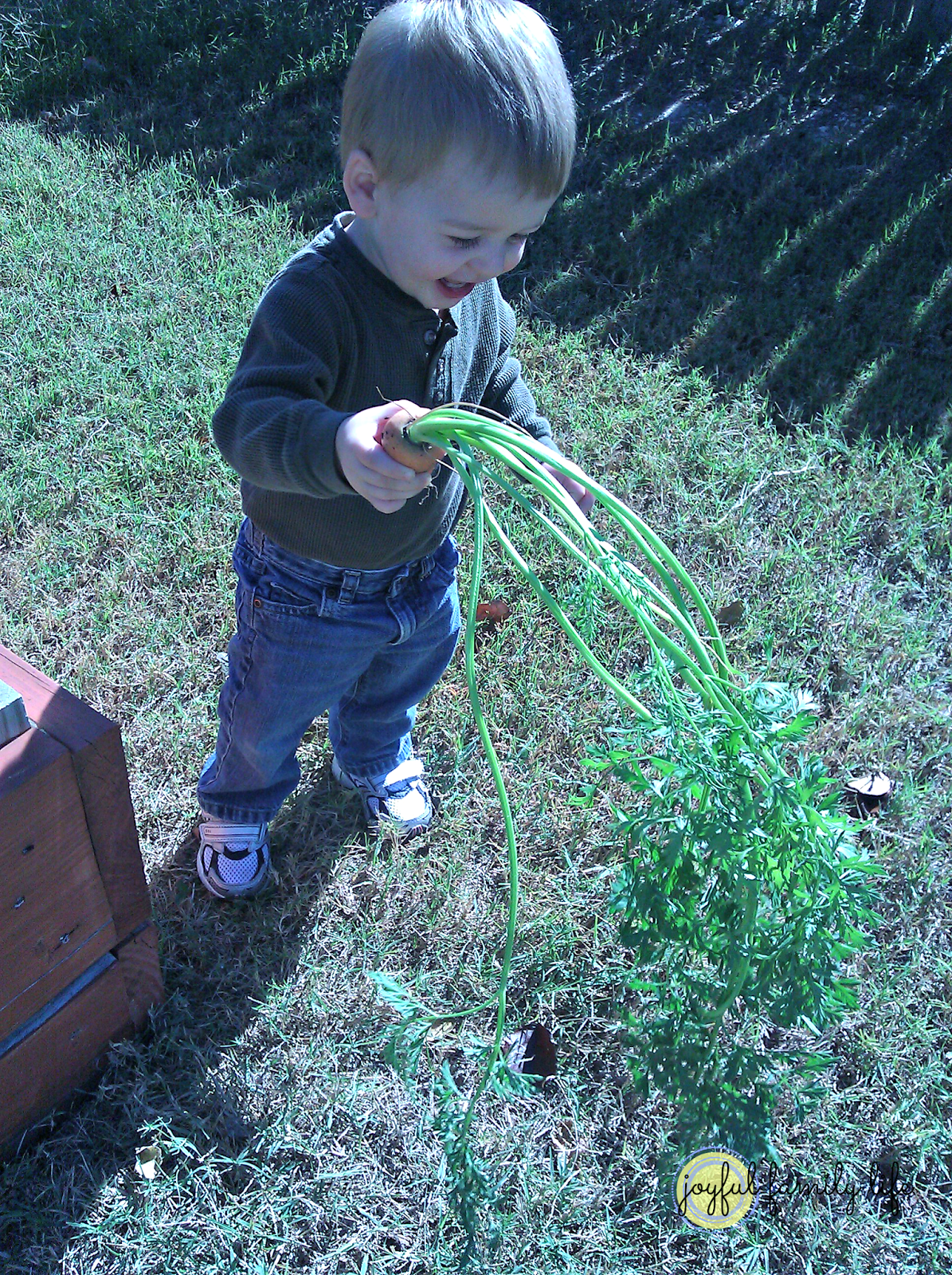 Help your kids eat veggies – plant a garden!