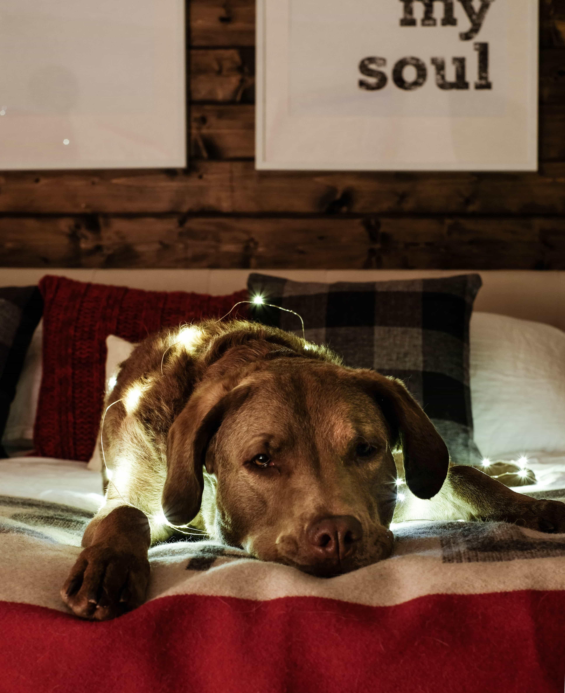 Christmas Lights Tour I Cozy, Christmas Bedroom Interiors I Dogs I