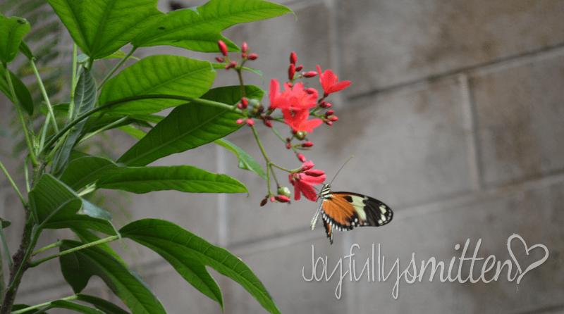 butterfly_Pavillion