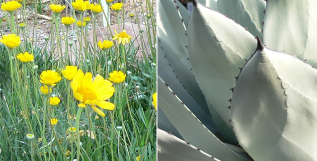 Killer Plant Duos For Your High Desert
