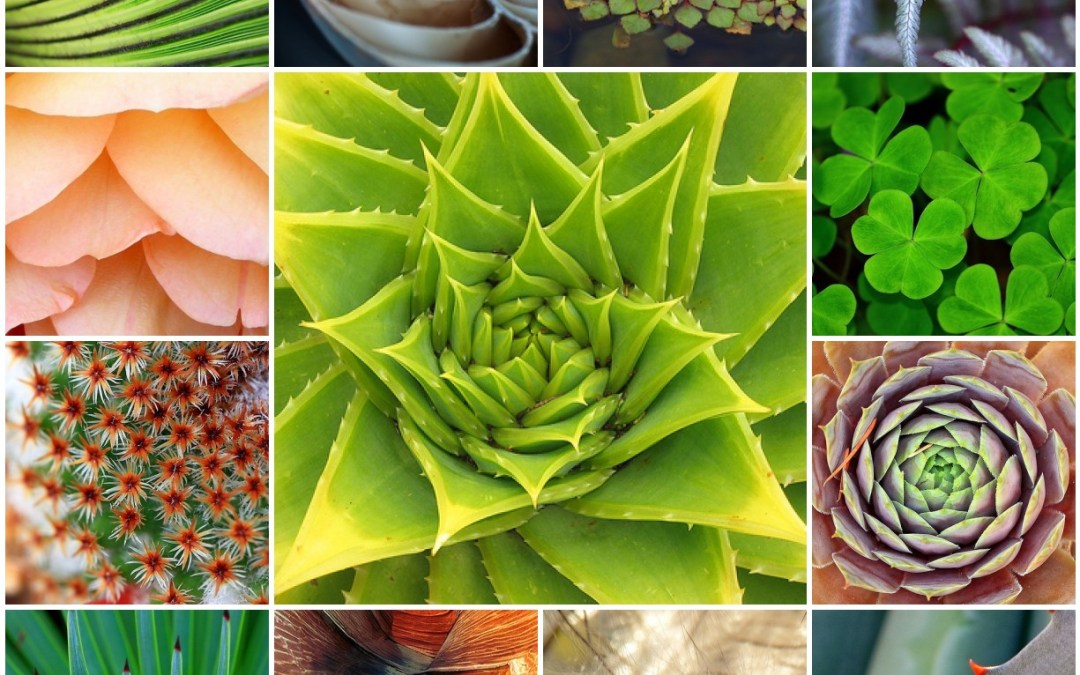 Patterns In Nature