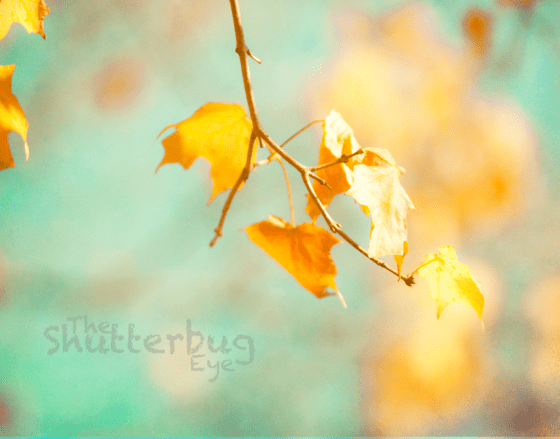 Turquoise and Golden Fall Leaves Photography