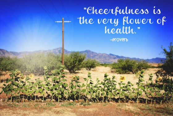 Sunflower Row Quote Cheerfulness Joy Happiness
