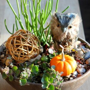 Fall succulent containter