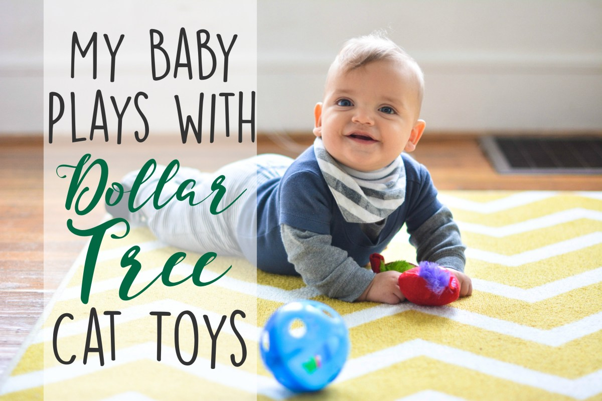 My Baby Plays with Dollar Tree Cat Toys*