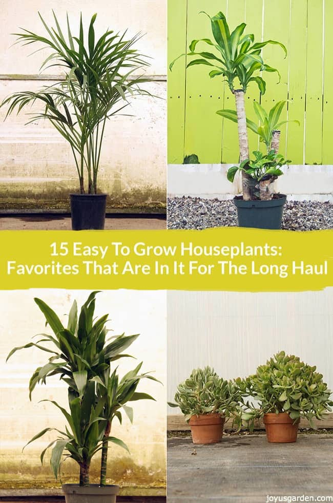 15 Easy Care Houseplants For Beginners Joy Us Garden