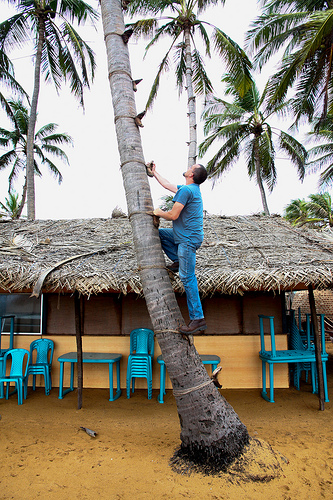 Shawn climbing a palm tree.