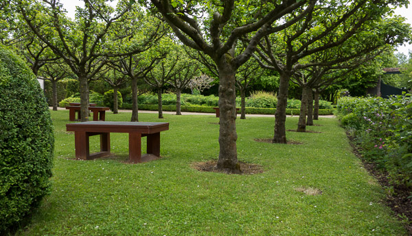 Benches under pollarded trees