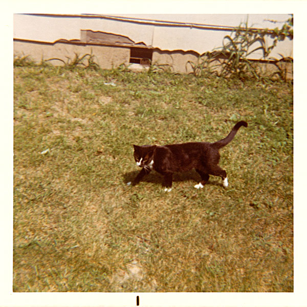 photo of black and white cat in yard