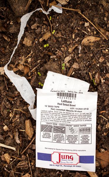 Lettuce seed tape