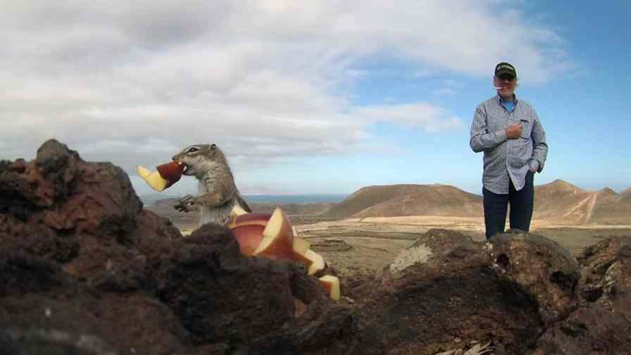 Fuerteventura ground squirrels or fuerteventura chipmunks