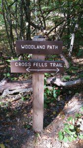 woodland-paths