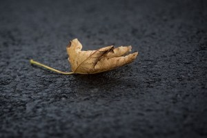 A yellow leaf on the ground
